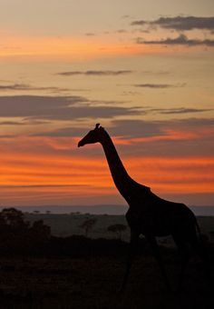 Safari at sunrise is a very moving experience  - Explore the World with Travel Nerd Nici, one Country at a Time. http://travelnerdnici.com