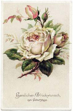 Old Design Shop ~ free digital image: vintage rose postcard (Beauty Design Free Printable) Art Floral, Floral Vintage, Vintage Diy, Vintage Cards, Vintage Paper, Vintage Flowers, Vintage Postcards, Vintage Prints, Vintage Clip Art