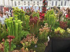 RHS-Chelsea-flower-show-2017-anewgarden-modern-garden-design-125.jpg (3264×2448)