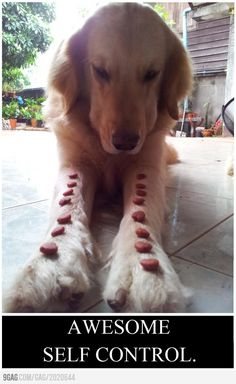 This dog has more self control than I do!