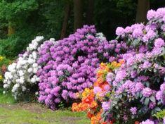 Kurpark Hamm im Frühling Foto Fausto ciotti Plants, Plant, Planets