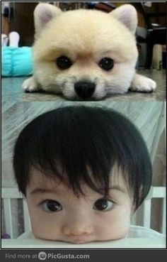 Asian babies are cuter than puppies Baby Animals, Funny Animals, Cute Animals, Baby Puppies, Cute Puppies, Baby Dogs, Doggies, Cute Animal Pictures, Funny Pictures