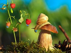 blues-talking-foxx:  glitterarygetsit:  superwhooligan:  gabrielsaunteredvaguelydownwards:  priceofliberty:  taktophoto:  Tale of nature from Vyacheslav Mishchenko  every single one of these photos looks like a dream  HOLY FUCKING SHIT HOW ADORABLE ARE THOSE SNAILS THIS IS LIKE ALICE IN WONDERLAND MET AN ATTENBOROUGH DOCUMENTARY AND TURNED THE 'BRIGHTNESS' FILTER UP TO FULL MOTHERFUCKING MOLLUSCS MAN I SWEAR  I feel like the photographer just took these snails and just put them in cute…