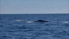 Whale, Gifs, Blog, Animals, World, Whale Watching, Note, Destinations, Vacations