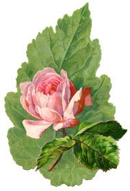 Vintage Image - Extra  Pretty Pink Rose with Leaf - The Graphics Fairy