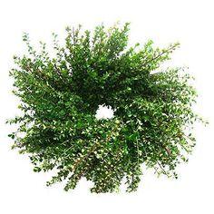 Wreath | One Kings Lane