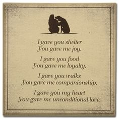 I gave you shelter, you gave me joy. Words of #gratitude for our #pets #cats. Pet loss counselling at www.catwisdom101.com @catwisdom101