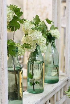 White hydrangeas - old soda bottles