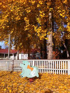 Beautiful autumn colours 2013, Helsinki.