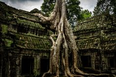 Angkor Wat, first a Hindu and then Buddhist temple in Cambodia, is the largest religious monument in the wo...