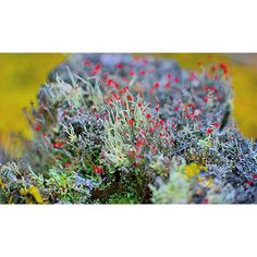 【afem2realm】さんのInstagramをピンしています。 《枯れ木。粘菌。  静かに過ごすのはこんな感じのペース。  水の中で動いてるみたい。  ノンフィルター。F値全開放。Narrative。  #苔 #粘菌 #山 #森 #太陽 #自然 #植物 #木 #花  #写真 #秋 #旅 #nikon #picture #design #art #moss #green #plants #flower #nature #photographer #landscape #garden #mountain #forest #travel #autumn #earth #love》
