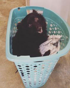 ALWAYS...always check our laundry. Almost washed this guy. He seemed happy about it. http://ift.tt/2eBdGik