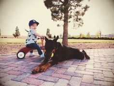 A BOY AND HIS DOBERMAN