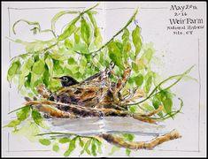 robin-nest_weirfarmnhs.jpg (798×611)