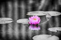 Boredpanda: That one detail! Lotus Flower Colors, Tropical Colors, Bored Panda, Black And White Photography, Strong Women, Fine Art Photography, Color Splash, Kiss, Touch