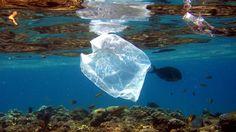Kenya bans plastic bags, may fine violators $38,000   News   Al Jazeera
