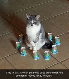 Field force for cats // funny pictures - funny photos - funny images - funny pics - funny quotes - #lol #humor #funnypictures