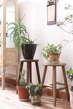 観葉植物のおしゃれなレイアウト例