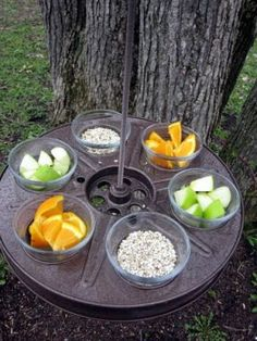 A REEL bird feeder. Facebook - www.facebook.com/outdoorcampus Our website www.outdoorcampus.org/
