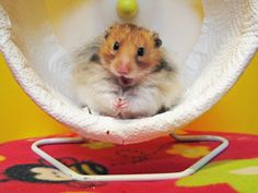 aww,cute,animals,hamster,lol,funny