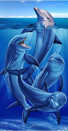 New Dolphin Range 1
