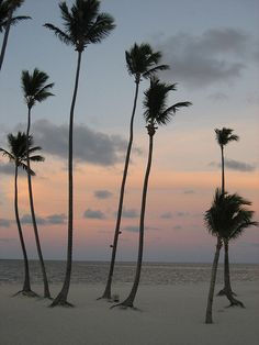 Palm Trees at Bavaro Beach | Find Your Beach In Punta Cana!