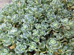 Availability T&L Nursery Plum Garden, Oregon, Nursery, River, Plants, Top, Inspiration, Succulents, Biblical Inspiration