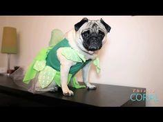 Money Awesomeness: Frugal Halloween Tips! - YouTube