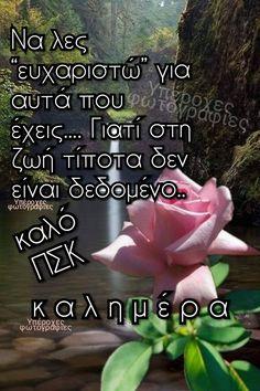 Good Night, Good Morning, Beautiful Pink Roses, Greek Quotes, Inspiring Sayings, Nighty Night, Buen Dia, Bonjour, Good Night Wishes