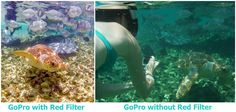 16 GoPro Tips and Tricks (for Beginners): GoPro Photographers Share - Go Pro - Ideas of Go Pro for sales. - GoPro red filter comparison while snorkeling Gopro Camera, Camera Phone, Dslr Cameras, Gopro Photography, Underwater Photography, Underwater Camera Housing, Red Filter, Gopro Accessories, Belize Travel