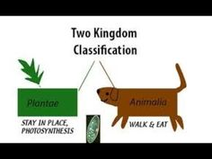 Two kingdom classification system Branches Of Biology, Photosynthesis, Learning, Studying, Teaching, Onderwijs