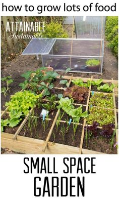 These small garden ideas will help you get the most bang for your vegetable gardening buck! Here& how to make the most of the space you have and what to plant for the best harvest. Garden ~ prepping ~ homestead ~ grow your own ~ seeds ~ vegetables Small Space Gardening, Small Gardens, How To Plant Small Garden, Front Gardens, Vertical Gardens, Organic Vegetables, Growing Vegetables, Organic Gardening Tips, Vegetable Gardening