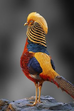 Beautiful and Colorful  Bird