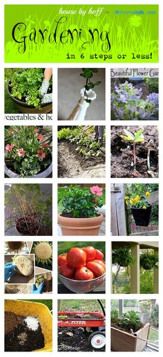New to gardening? Get your feet wet with these 6-step or less gardening projects!
