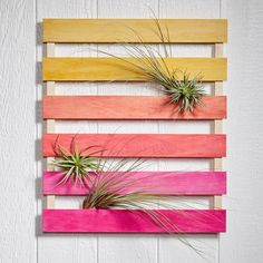 Mini Palette with Plants: Easy to blend TintIT.® colors create an ombre color grid for unique wall planter Hanging Plant Wall, Diy Hanging, Air Plant Display, Plant Decor, Garden Terrarium, Terrariums, Ideias Diy, Budget, Diy Pallet Projects