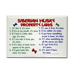 Siberian Husky Property Laws