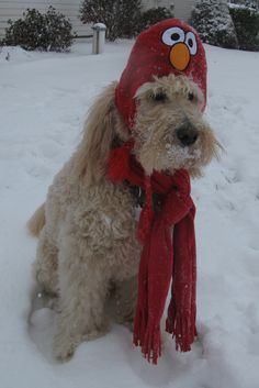 Lovin the snow !