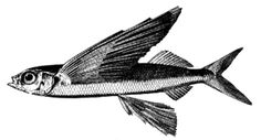 Fish, Birds, and Mammals of the Open Ocean