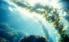 Can Algae Power Our World?