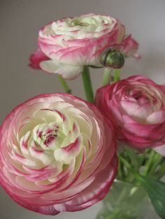..un de ces bouquets de fleurs qui partent à la recherche d'un coeur et qui ne trouvent qu'un vase.. R. Gary