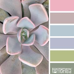 Color Palette: Pastels.  If you like our color inspiration sign up for our monthly trend letter - click the image for the link.