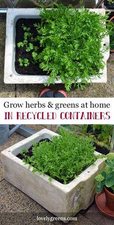 Garden Recycling: Growing herbs and greens at home in recycled containers Growing Greens, Growing Herbs, Growing Flowers, Growing Vegetables, Planting Flowers, Organic Gardening, Gardening Tips, Sustainable Gardening, Kitchen Gardening
