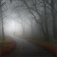 In a foggy wood by Vadim Trunov, via 500px
