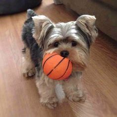 Ready for some basketball?