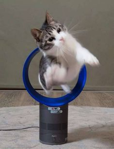 Funny Animal Pictures Of The Day - 22 Pics I Love Cats, Crazy Cats, Cute Cats, Funny Animal Pictures, Funny Animals, Cute Animals, Kittens Cutest, Cats And Kittens, Gatos Cats