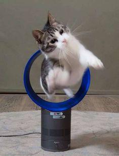 『使い方を間違えている』猫たちのヤバい画像で朝から癒されろwwwww : 【2ch】ニュー速クオリティ