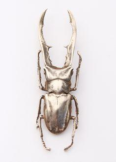 Beetle, Groom, Jewellery, Animals, Animales, Jewelery, Animaux, Bicycle Crunches, Grooms