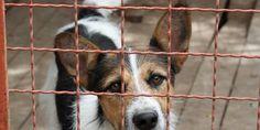 Say NO to the CRUEL amendments to Serbia's Animal Welfare Act