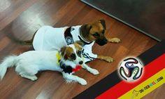 unsere zwei Bürohunde: der kleine Chacky und die schöne Leya <3
