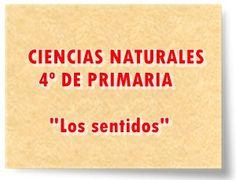 """CIENCIAS NATURALES DE 4º DE PRIMARIA: """"Los sentidos"""""""